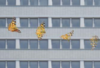 Die weltweite Zahl landlebender Insekten ist in den vergangenen Jahrzehnten zurückgegangen.
