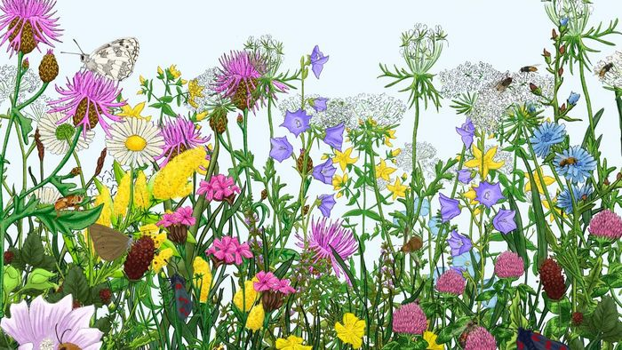 Grafik einer Blumenwiese