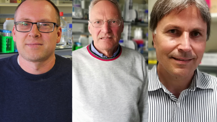 Auf dem Bild sind Dr. Uwe Müller, Prof. Dr. Dr. Mathias Büttner und Prof. Dr. Gottfried Alber zu sehen.