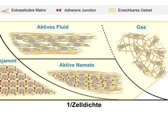 Schematische Darstellung verschiedener Bewegungsarten von Tumorgewebe in Extrazellulärer Matrix.