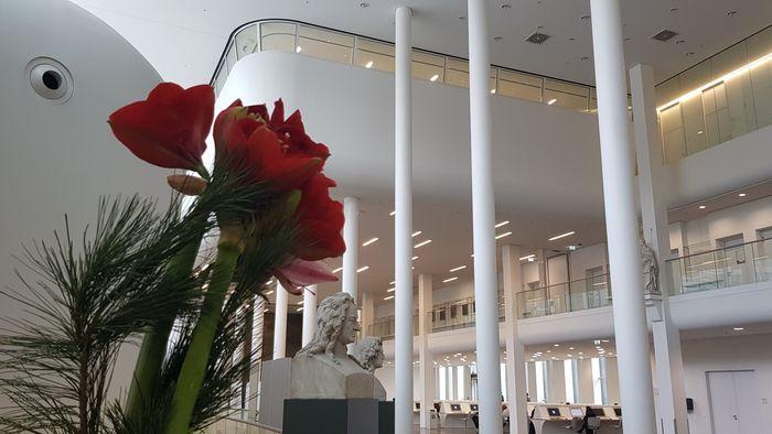 Das Bild zeigt im Vordergrund Amaryllis und Tannenzweige im Foyer des Neuen Augusteums.