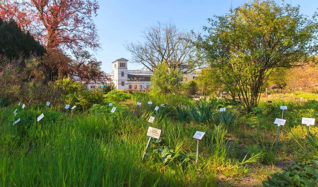 Leipzig is host to the oldest botanical garden in Germany. On an area of only three hectares, around 6500 of the 350,000 plant species worldwide grow here.