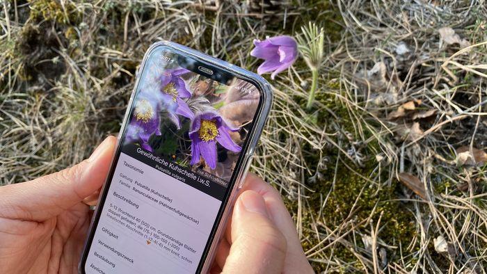 Die App Flora Incognita kann unbekannte Pflanzen bestimmen. Mithilfe der Standortdaten der erfassten Pflanzenarten entstehen außerdem wertvolle Datensätze.