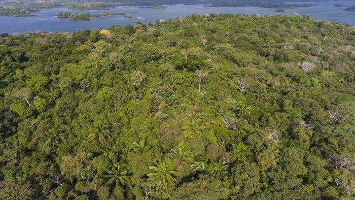 Teile eines Sekundärwaldes, der ca. 70 bis 100 Jahre nach einer landwirtschaftlichen Nutzung des Landes nachwächst.