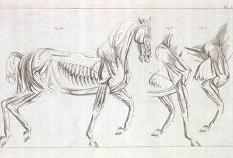 Gezeichnete Pferde