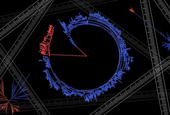 Baumdiagramme wie dieses bilden die Stammesgeschichte von Bakterien ab. Sie sind die Grundlage für das Verständnis mikrobieller Evolution.